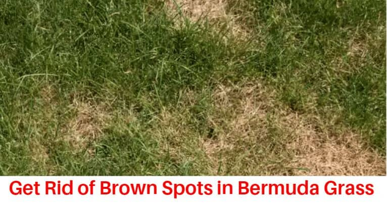 How to get rid of brown spots in bermuda grass