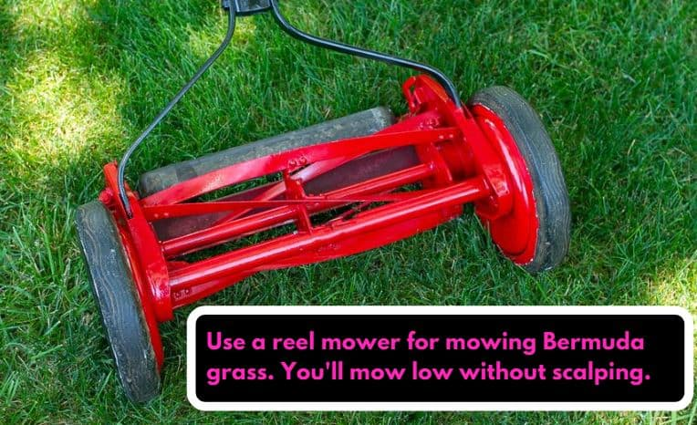Reel mower is the best for mowing bermuda grass at a good height