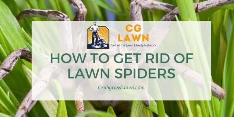 how to get rid of lawn spiders