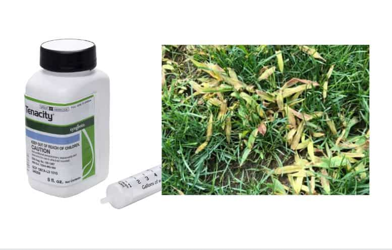 safest weed killer without killing grass