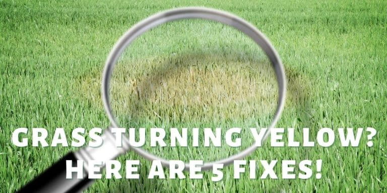 fix grass that's turning yellow