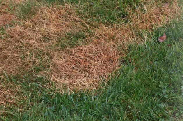 Signs of grub damage - and how to kill grubs naturally