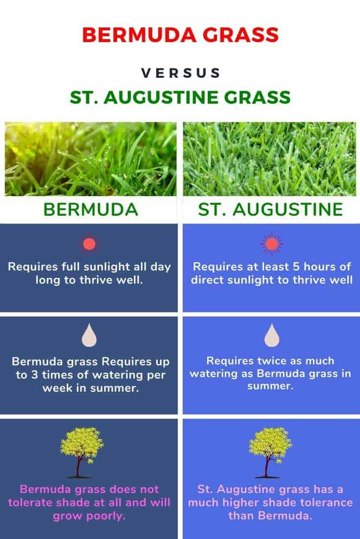 St. Augustine Grass vs Bermuda Grass - Differences, Comparison, which one to choose