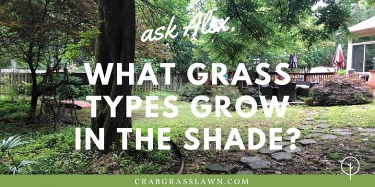 what grass types grow in the shade