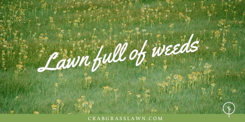 how to kill a lawn full of weeds