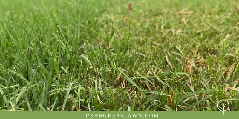 Mowing Heights For Newly Planted Sod