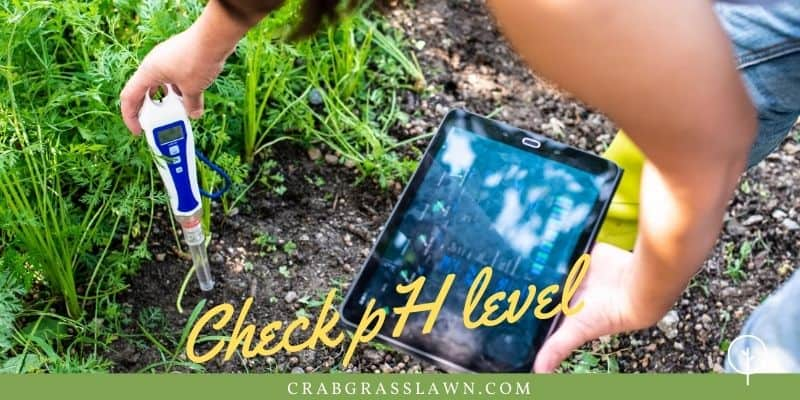 check ph levels for moss growth