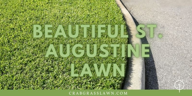 A Beautiful Filled In St. Augustine Lawn