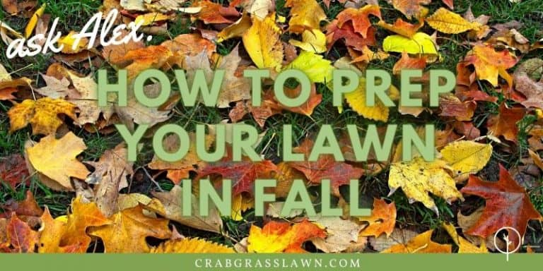 how to prep your lawn for winter1