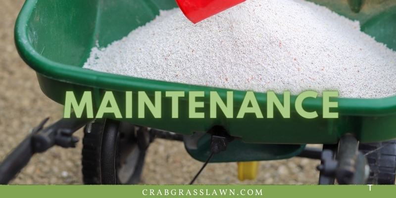 how to maintain st. augustine grass