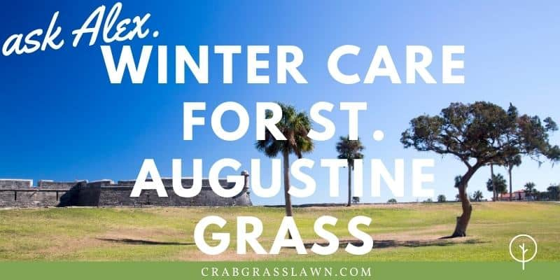 winter care for st. augustine grass
