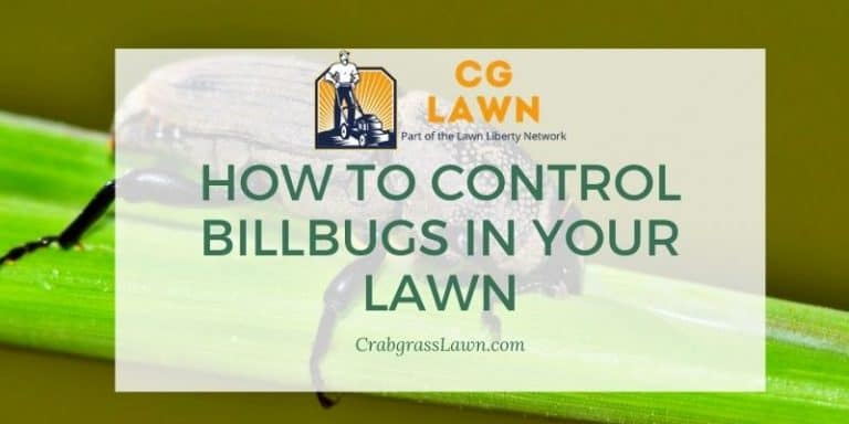 How to control billbugs in your lawn