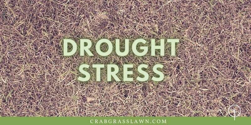 drought stress on st. augustine grass1