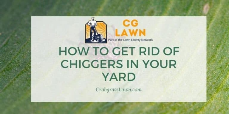 how to get rid of chiggers in your yard