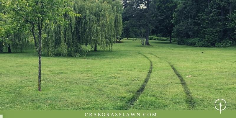 tire marks in lawn