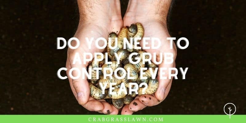 Do you need to apply grub control every year?