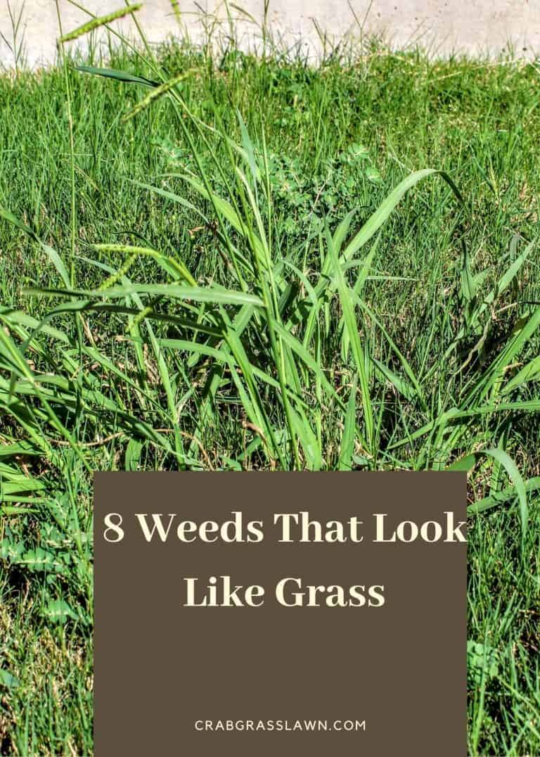 8 Weeds That Look Like Grass
