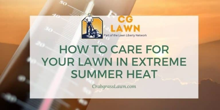 How to care for your lawn in extreme summer heat