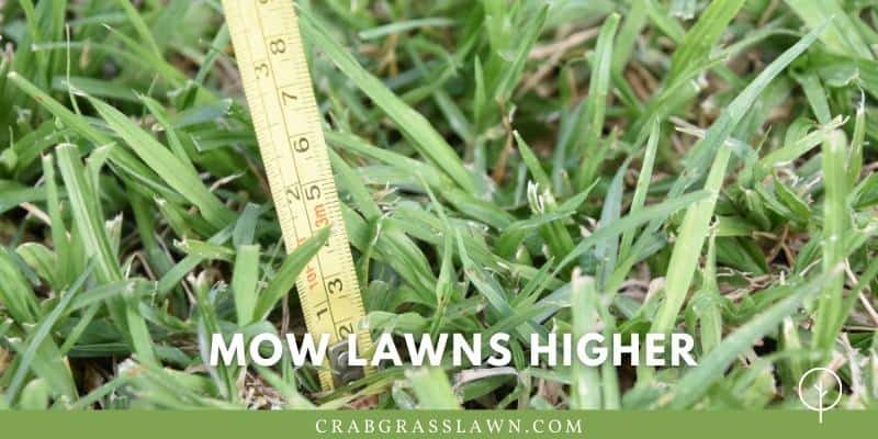 Mow lawns higher
