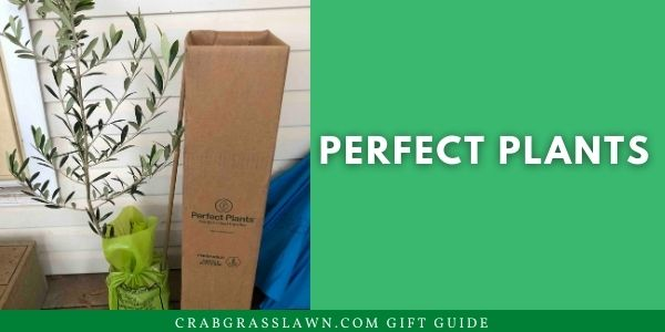 Perfect Plants Review