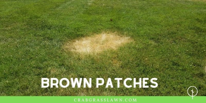 brown patches due to billbug infestation