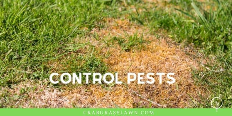 control pests to reduce brown spots