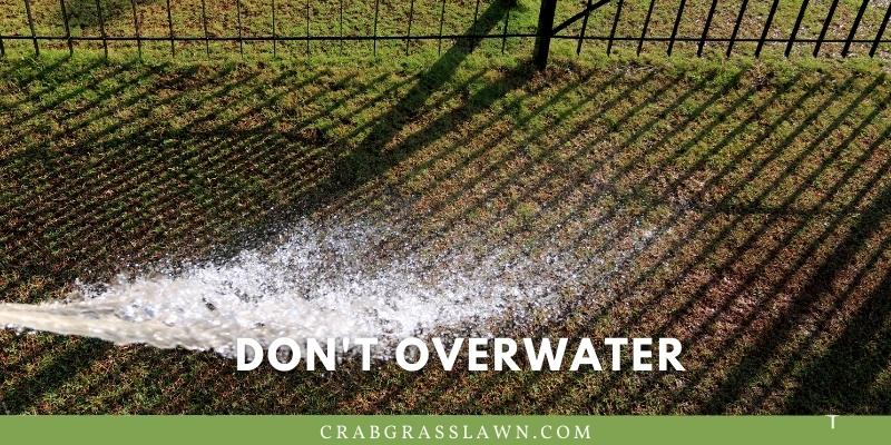 don't overwater in the summer