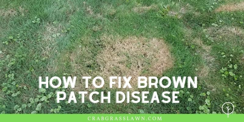 how to fix brown patch disease