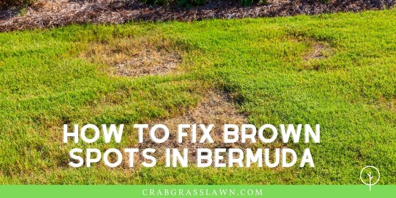 how to fix brown spots in bermuda grass