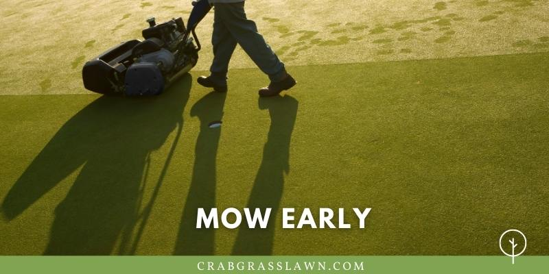 mow early in the morning