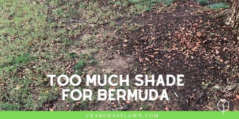 too much shade for bermuda grass