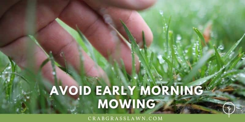 avoid early morning mowing