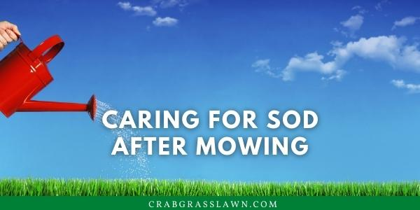 caring for sod after mowing