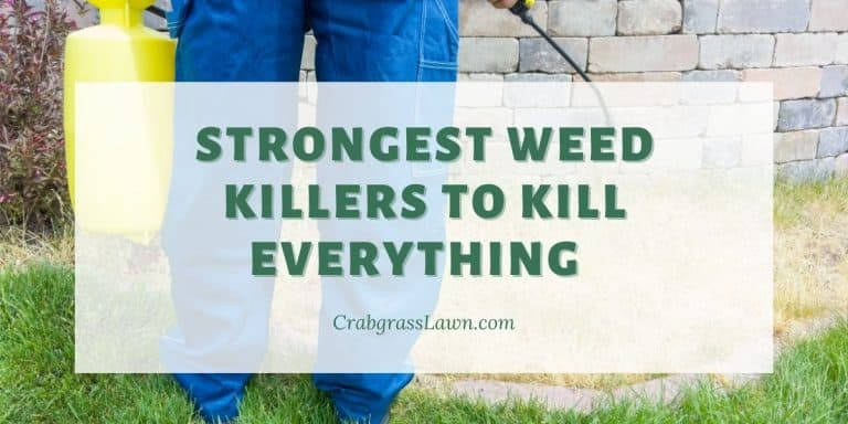 strongest weed killers to kill all plant life