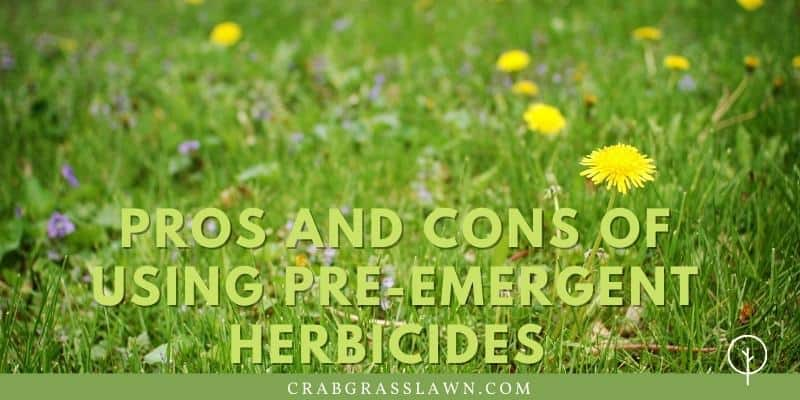 Pros and Cons of Using Pre-Emergent Herbicides