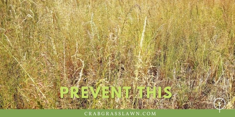 prevent weeds with a pre-emergent