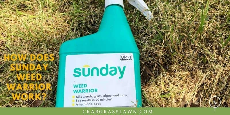 how affective is sunday weed warrior on weeds?