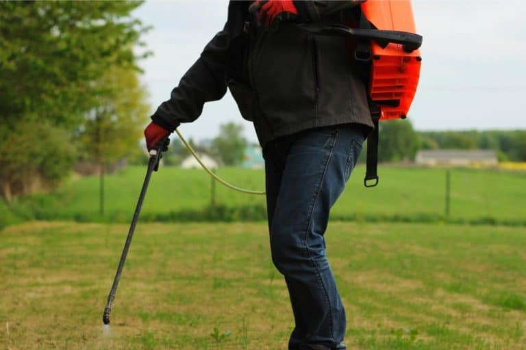 What Are the Best Backpack Sprayers? Reviews and Buyer's Guide