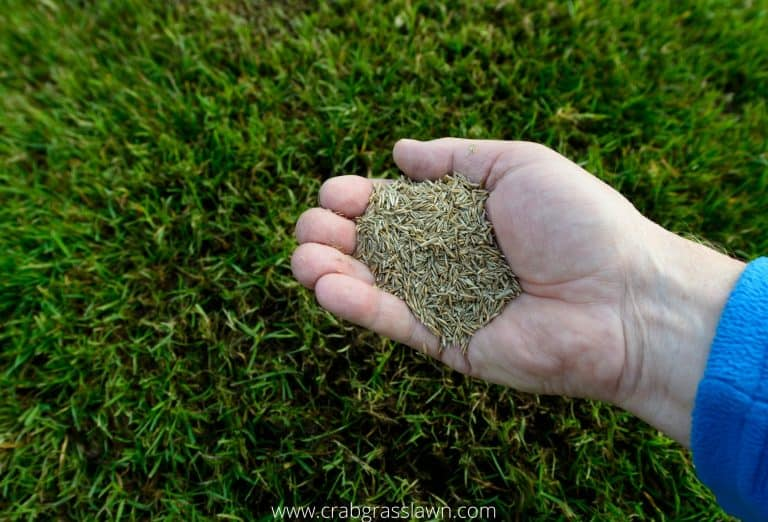 Best Grass Seed for Your Lawn